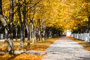 Autumn park alley